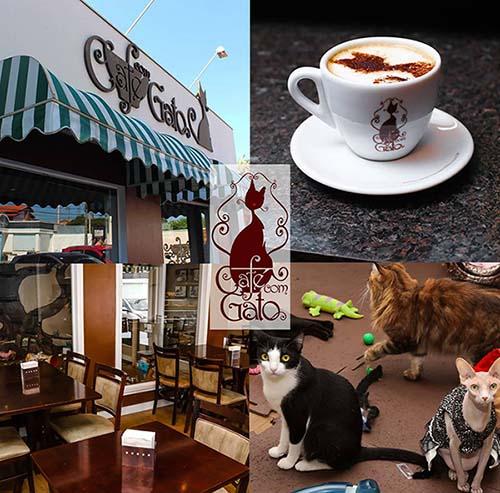 modelo de cafeteria café com gato