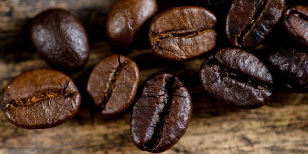 Tipos de grãos de café robusta e arábica